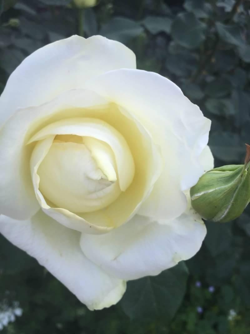 みさき「背徳○れの秘事に花がうるむ」12/11(水) 01:54   みさきの写メ・風俗動画