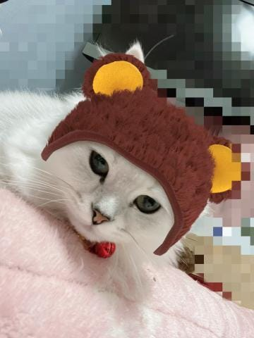 れい「おはこんにちわ〜〜〜」01/22(水) 14:56 | れいの写メ・風俗動画