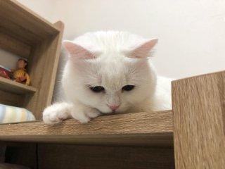 かなえ「おはよう^_^」01/24(金) 16:29   かなえの写メ・風俗動画