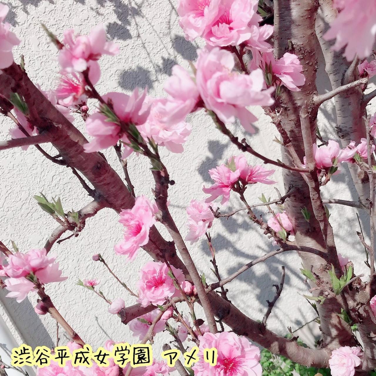 アメリ「●行きしなに、」03/21(土) 09:55   アメリの写メ・風俗動画