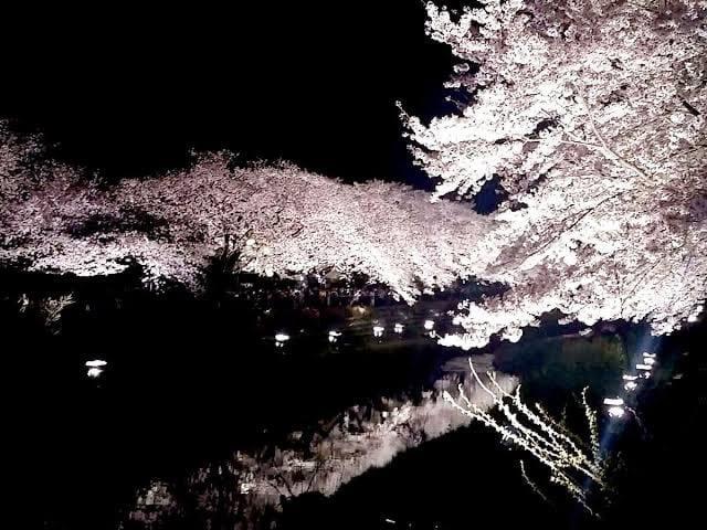 安藤銀花「桜夢見て」03/23(月) 17:04 | 安藤銀花の写メ・風俗動画