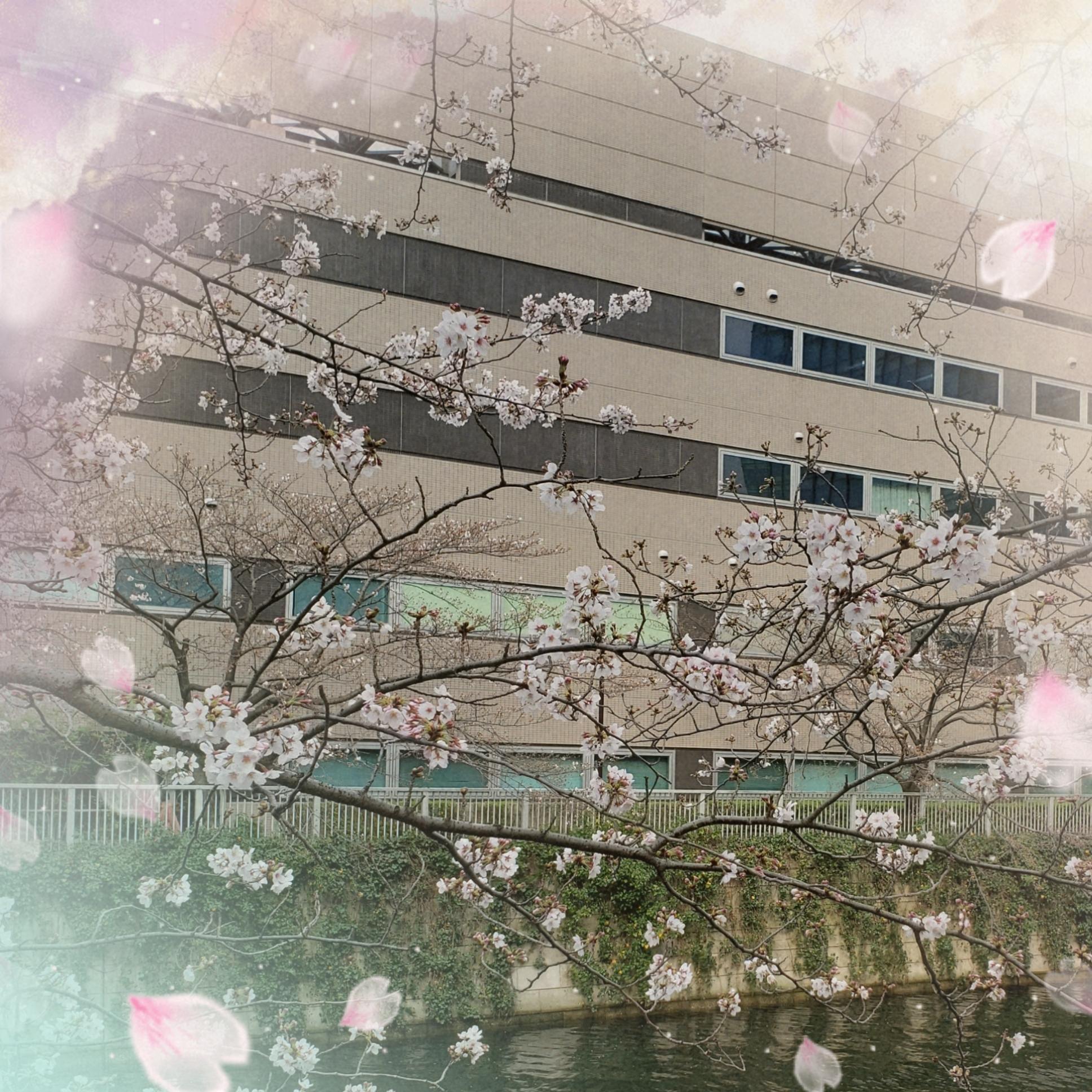 森脇いずみ「出勤しました〜」03/24(火) 16:46 | 森脇いずみの写メ・風俗動画