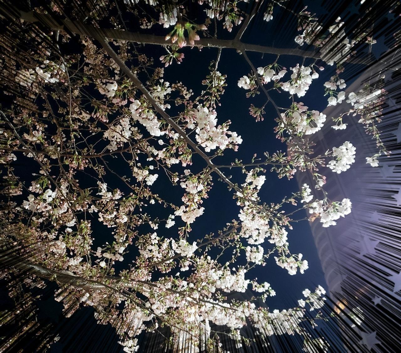 森脇いずみ「出勤しました〜」03/25(水) 18:51 | 森脇いずみの写メ・風俗動画