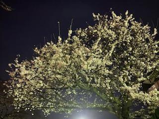 日笠太陽「お花見?」03/26(木) 17:30 | 日笠太陽の写メ・風俗動画