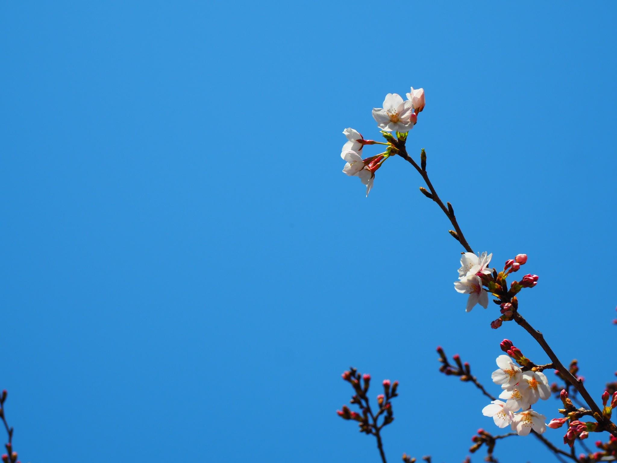 白鳥「No.44白鳥」03/27(金) 17:15 | 白鳥の写メ・風俗動画