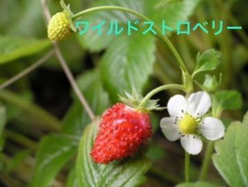 りん「あるある」03/29(日) 07:56 | りんの写メ・風俗動画