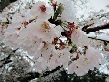 阿良々木あおい「3月の雪」03/29(日) 20:18 | 阿良々木あおいの写メ・風俗動画