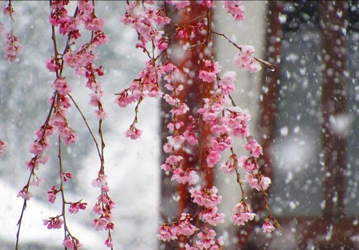 和歌(わか)「雪景色の朝?」03/30(月) 07:57   和歌(わか)の写メ・風俗動画
