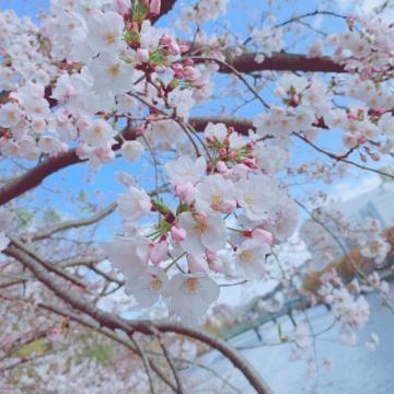 「さくら」03/30(月) 09:27 | ーモモナーの写メ・風俗動画