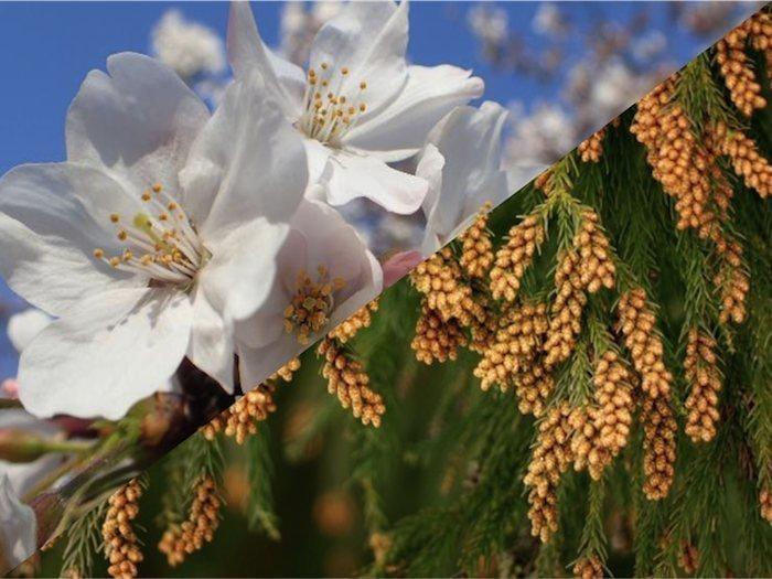 和歌(わか)「桜花爛漫♪」04/02(木) 07:29   和歌(わか)の写メ・風俗動画