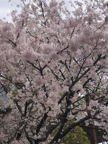 玲菜(れな)「待機中なの??」04/03(金) 14:06 | 玲菜(れな)の写メ・風俗動画
