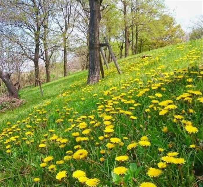 和歌(わか)「春うらら」04/04(土) 09:42   和歌(わか)の写メ・風俗動画