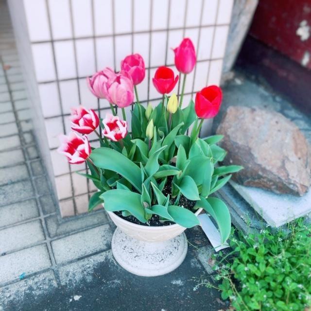 「帰ります(`・ω・´)」04/06(月) 19:40 | ゆぁ。(スレンダー系美少女)の写メ・風俗動画