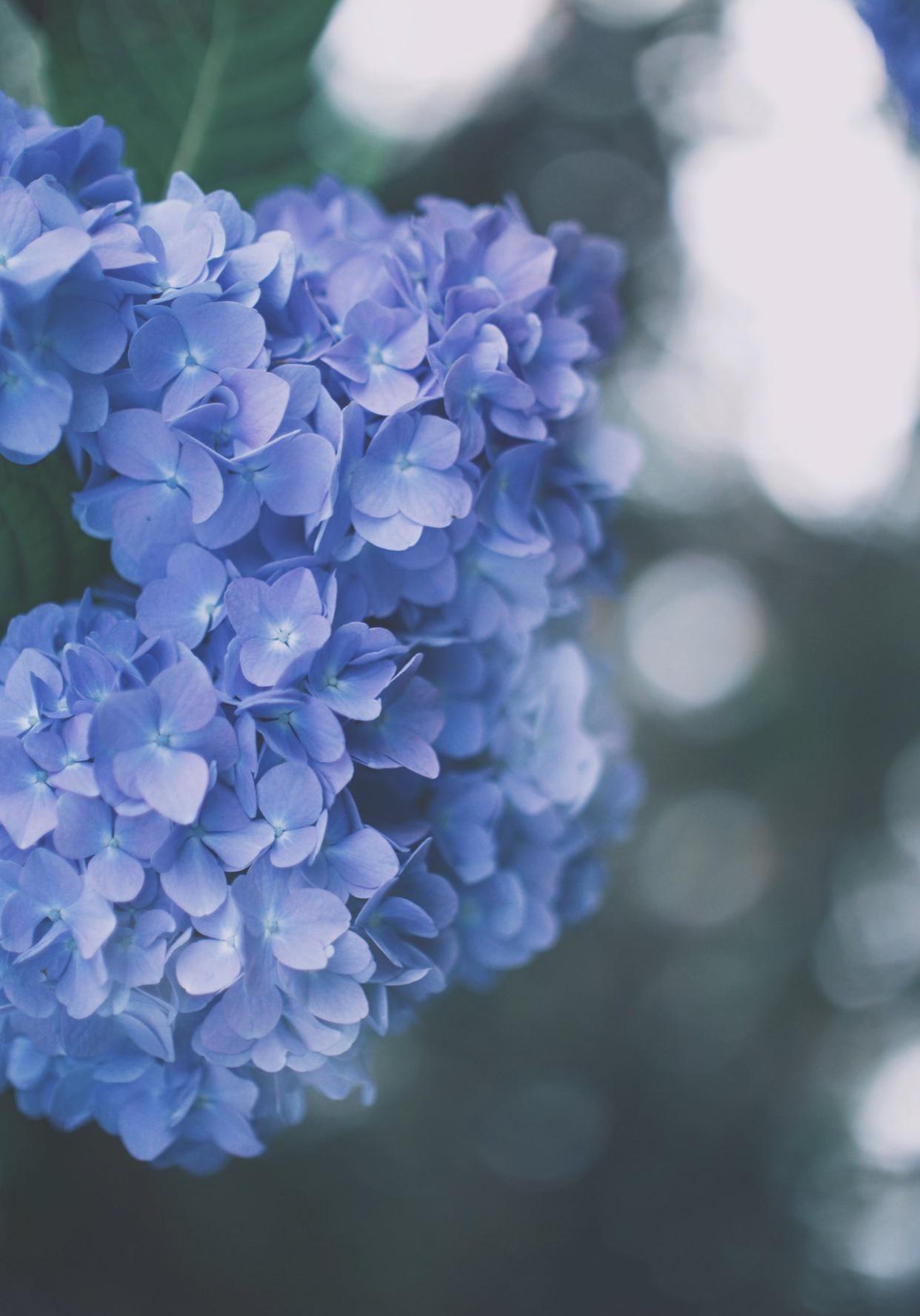 「蒼に魅了されて」06/02(火) 10:58 | 彩乃の写メ・風俗動画