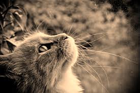 星空 きれい「本日のお礼です☆」09/18(月) 23:05   星空 きれいの写メ・風俗動画