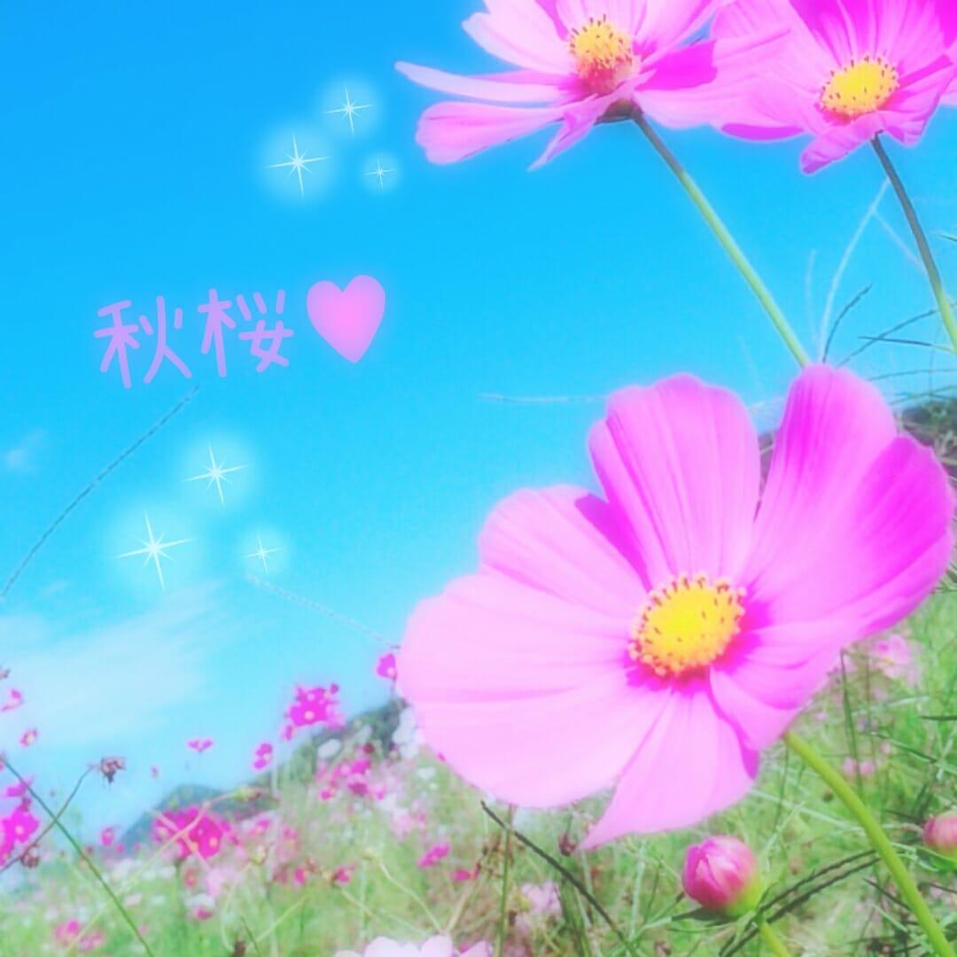 ★さくら★「出勤報告です(*´-`)」09/22(金) 13:36 | ★さくら★の写メ・風俗動画