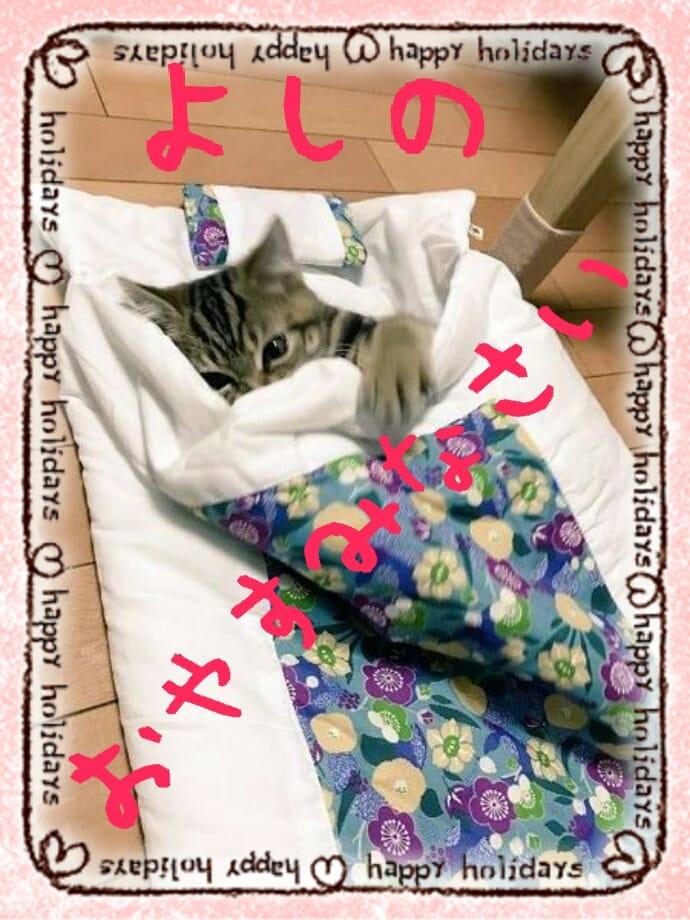 よしの「おやすみなさいませ(-_-)zzz」09/25(月) 05:22 | よしのの写メ・風俗動画
