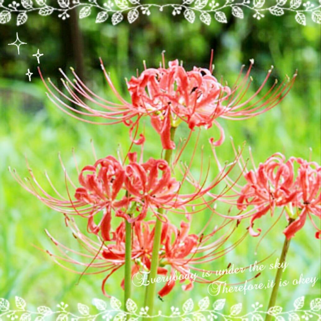 水島香織「おはようございます(^^)v」09/25(月) 09:52 | 水島香織の写メ・風俗動画