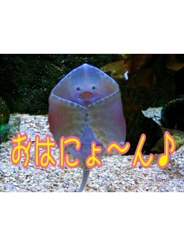 ゆか「モニ(ノ)・ω・(ヾ)モニ」09/26(火) 08:23 | ゆかの写メ・風俗動画