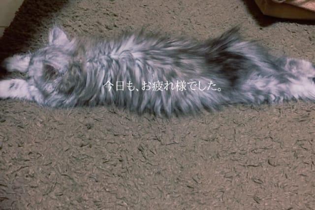 「ありがとう!」07/09(木) 07:28 | OL)ゆりあの写メ・風俗動画