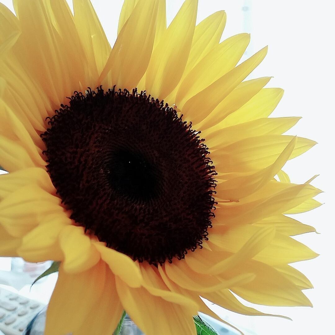 「おはようございます」07/12日(日) 09:05   ぴあのの写メ・風俗動画
