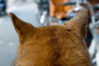 「犬の耳の匂い」10/06(金) 09:20 | りおの写メ・風俗動画