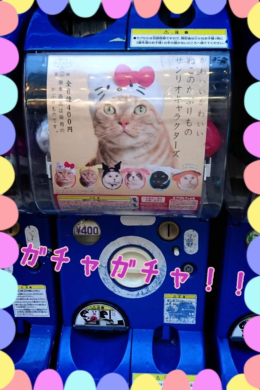 「ガチャガチャ!!☆かすみ☆」10/18(水) 17:47 | かすみの写メ・風俗動画