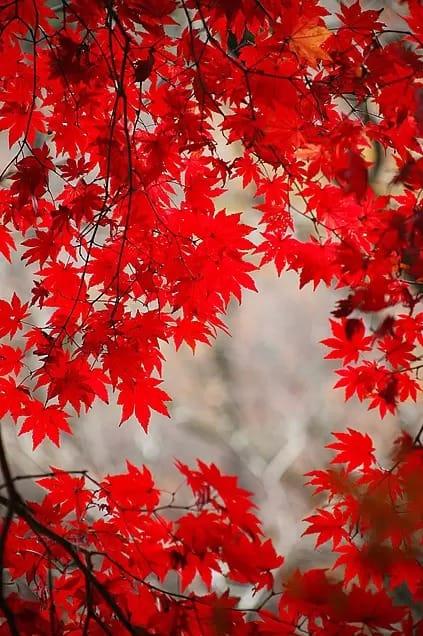 まや「紅葉」10/20(金) 05:12 | まやの写メ・風俗動画