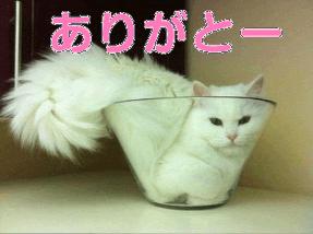 「お礼ブログです(*^^*)」10/20(金) 20:44   みあきの写メ・風俗動画