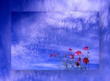 「お礼(о´∀`о)」10/21(土) 02:44 | みさと◆経験浅い奥様の写メ・風俗動画
