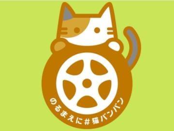 智里(ちさと)「猫バンバン」10/21(土) 17:52 | 智里(ちさと)の写メ・風俗動画