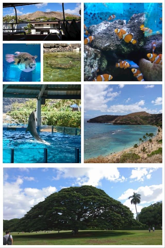 「女子旅ハワイ旅行さん」10/23(月) 09:39 | なぎさの写メ・風俗動画