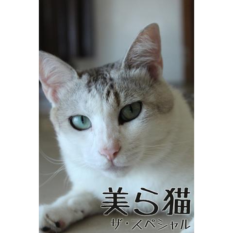 美ら猫 ザ・スペシャル