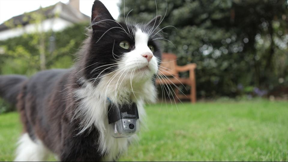 密着!ネコたちの1週間|dTV公式‐12万作品が見放題