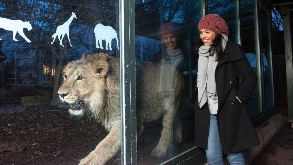 密着!夜の動物園 「眠り」の謎に迫る|dTV公式‐12万作品が見放題