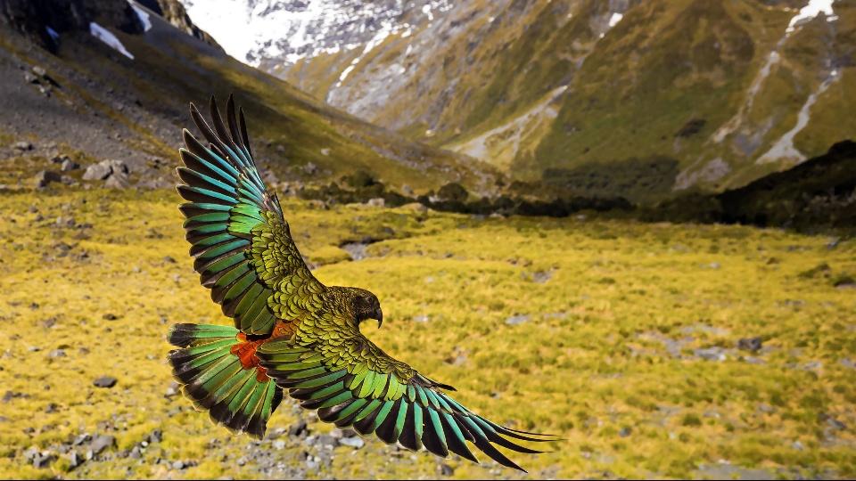 ワイルド・ニュージーランド~美しき野生の楽園|dTV公式‐12万作品が見放題