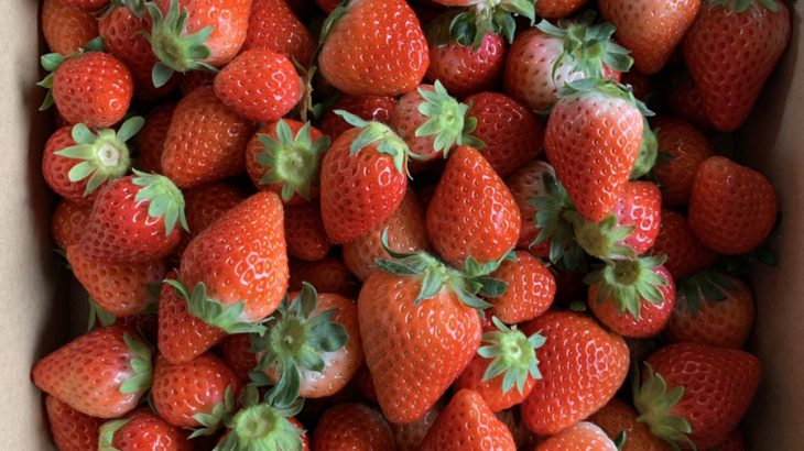 【夏でも食べたい】「冷凍イチゴ」をたっぷり3kg
