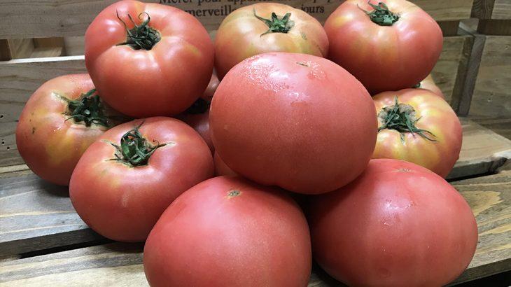 規格外トマト8kgを3名様に送料負担でプレゼント