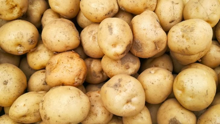北海道産 馬鈴薯 10kg