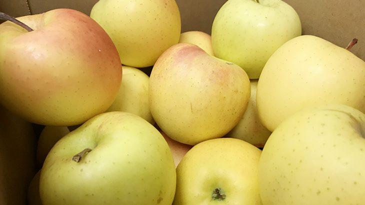 【3,500円相当】規格外 青りんご3kgを3名様にプレゼント!