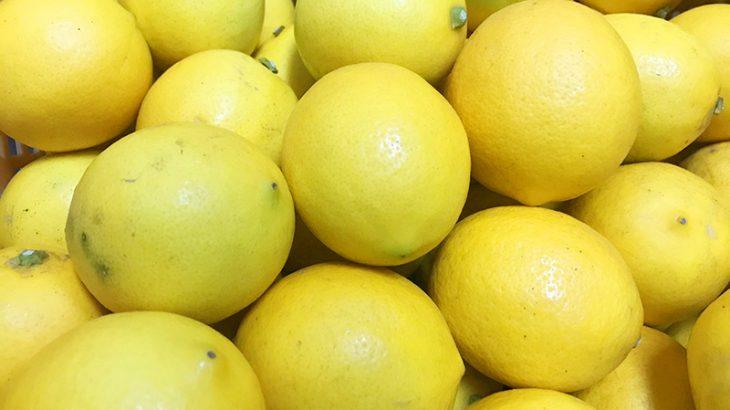 【もちろん国産】規格外レモン5kgを2名様にプレゼント!
