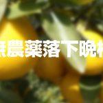 【送料負担】無農薬落下晩柑10kgを1名様にプレゼント!