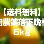 【送料無料】無農薬落下晩柑5kgを1名様にプレゼント!