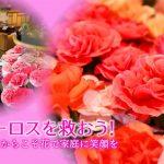 【購入はコチラ】フラワーロス削減!野菜果物12種類セット2,100円(初回500円引)+お花一輪プレゼント!