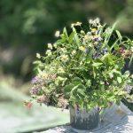 【販売開始】コロナで売り先がなくなった無農薬ハーブを花束にしました
