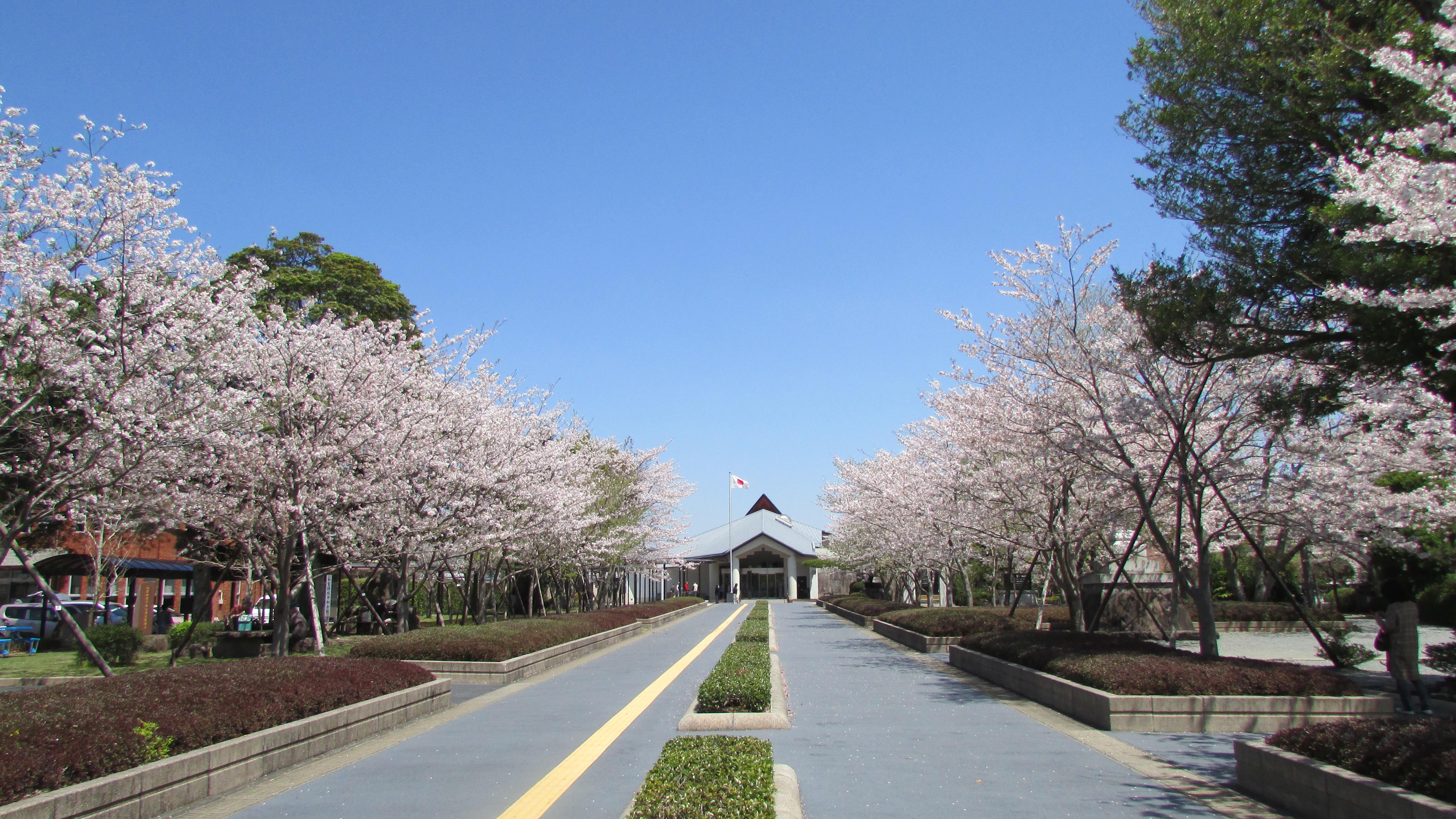 知覧特攻平和会館。春には多くの桜の花に囲まれます(提供:南九州市)