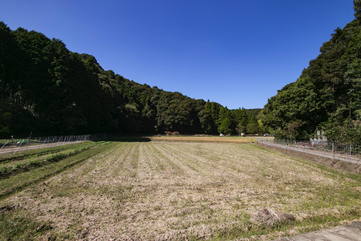 整地された管理地。将来的には、秋になるとこの一帯が真っ赤に染まる景色が見られると言います
