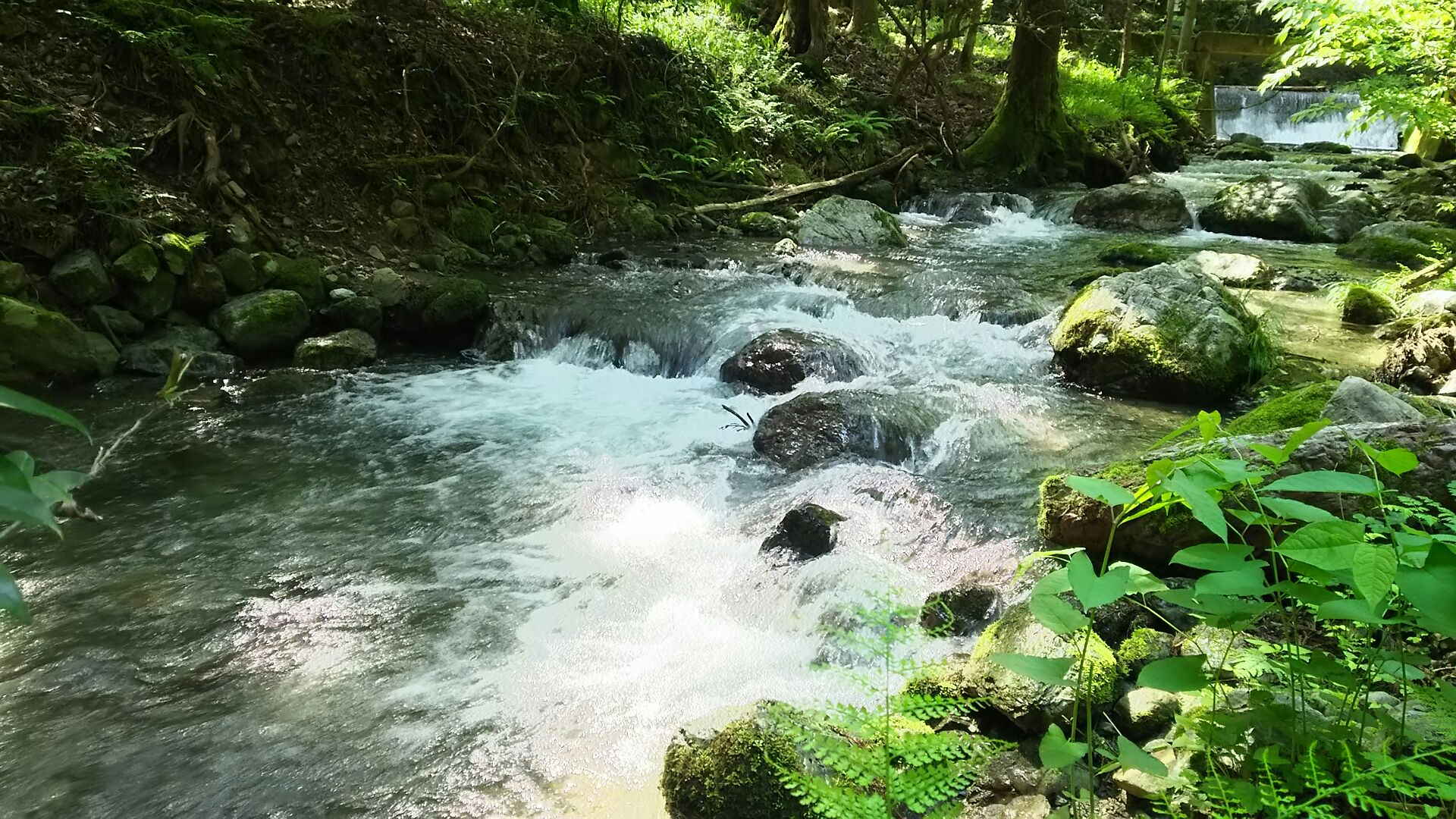 大谷川の上流