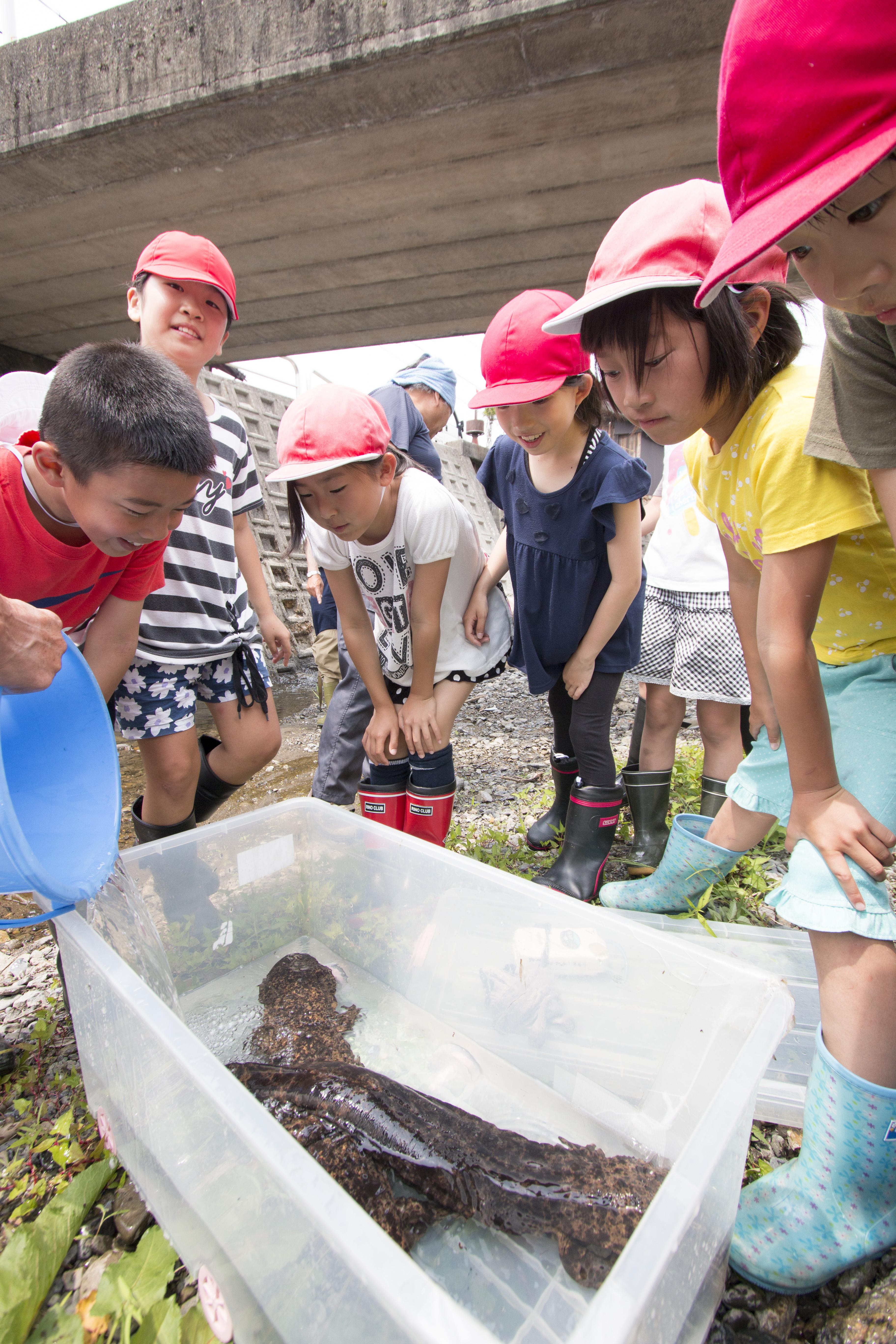 保護されたオオサンショウウオを観察する子どもたち