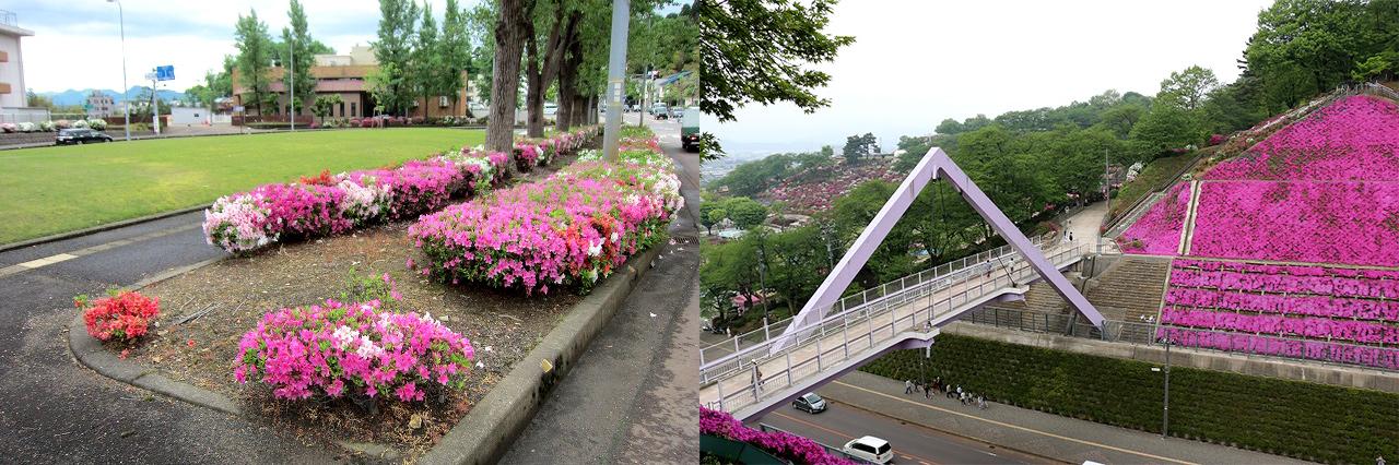 ↑左:街路桝のつつじ、右:西山公園のシバザクラ